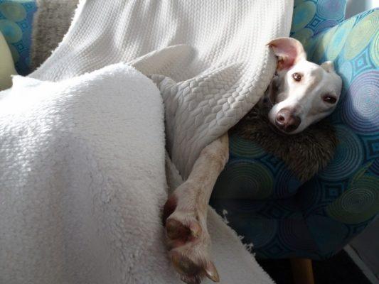 winter tricot